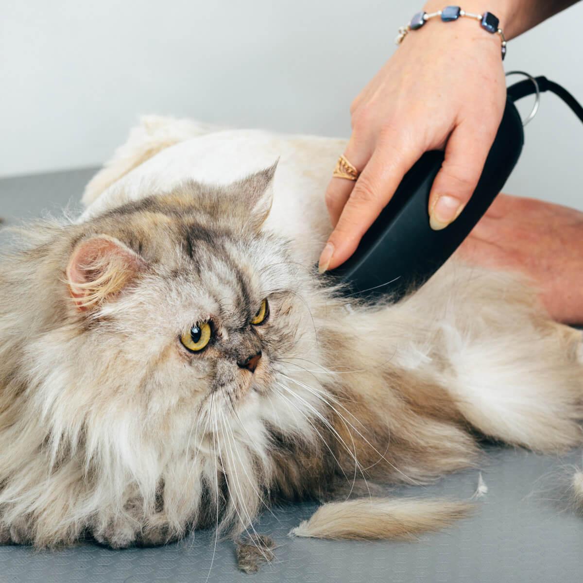 Cat Grooming Experts Baton Rouge Royal Treatment Pet Salon