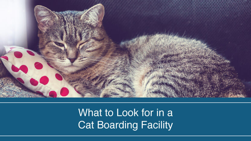 What to Look for in a Cat Boarding Facility