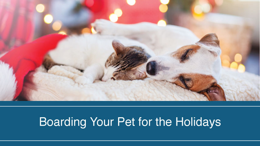 Boarding your pet for the holidays